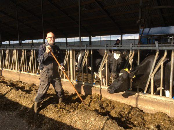 Klaas in de stal bij de koeien