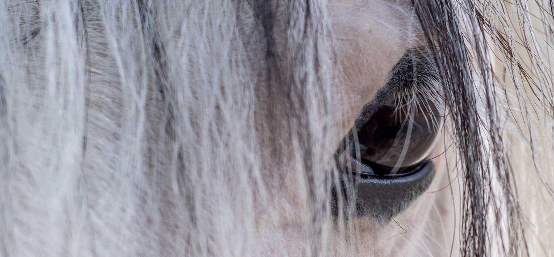 Equus & Ego